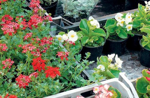 Rośliny na miarę ogrodu